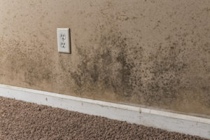 mold removal martin, mold cleanup martin